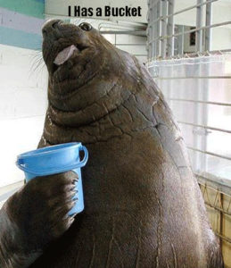 image of an Elephant Seal holding a blue bucket